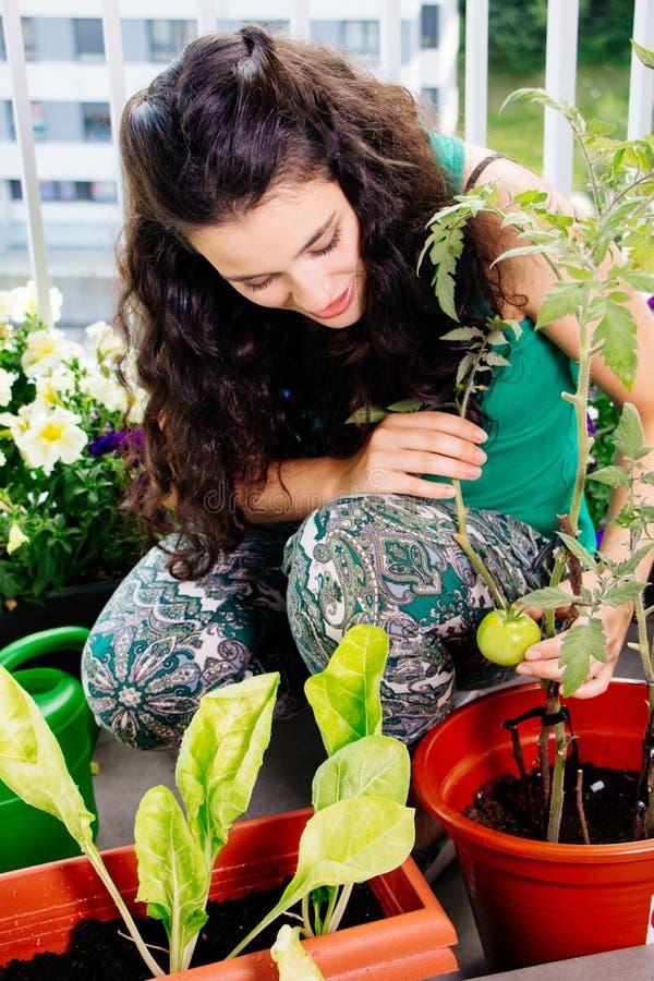 少妇照料她阳台的小的果树园 库存照片