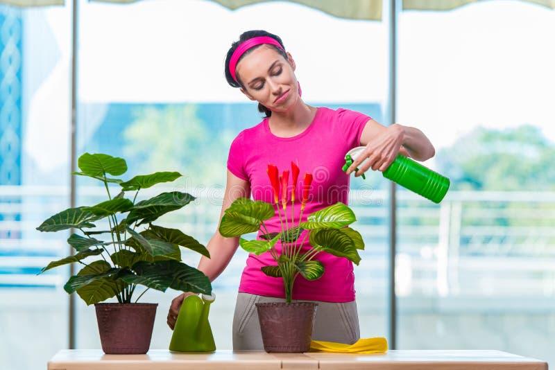 Download 少妇照料家庭植物 库存照片. 图片 包括有 偶然, 温室, 业余爱好, 藏品, 园艺, 关心, 愉快, 本质 - 72366038