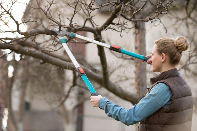少妇照料庭院 切口树枝 免版税图库摄影