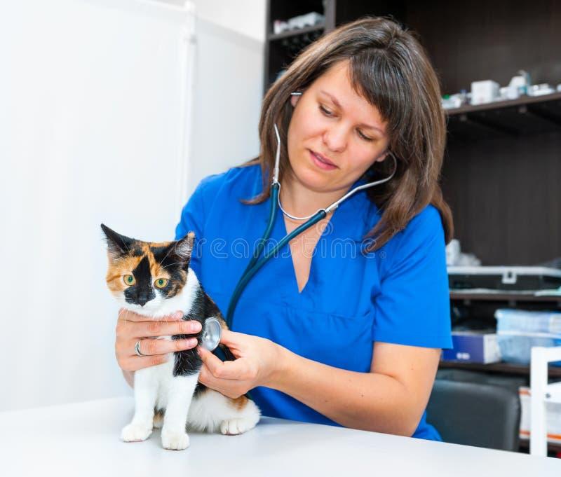 少妇狩医检查猫 免版税库存照片