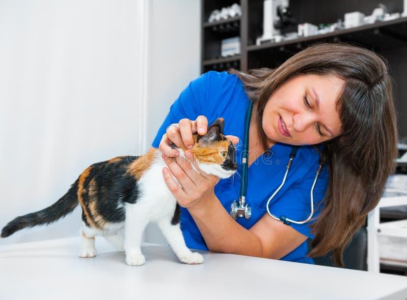 少妇狩医检查猫 库存照片