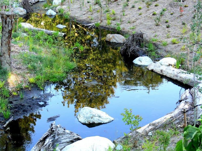 少许池塘 免版税图库摄影