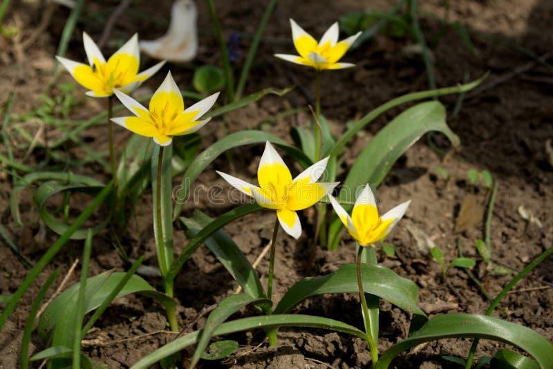 少许黄色和白花 免版税库存照片