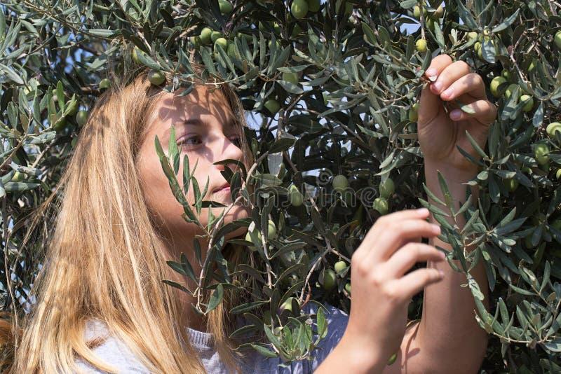 少年收获绿橄榄,画象 库存图片