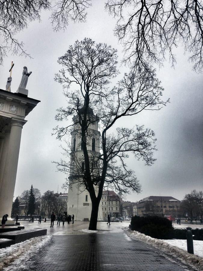 维尔纽斯中心广场树 图库摄影
