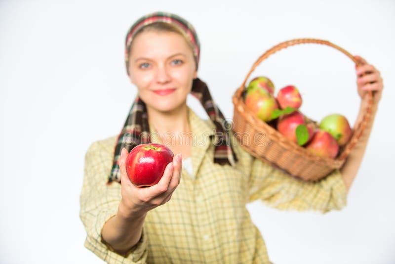 尝试这个成熟水多的苹果 妇女恳切的村民运载篮子用自然果子 夫人花匠感到骄傲为她的收获 库存照片