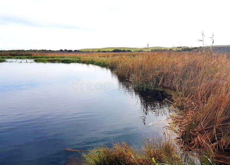 尤恩` s池塘,原始淡水生态系 图库摄影