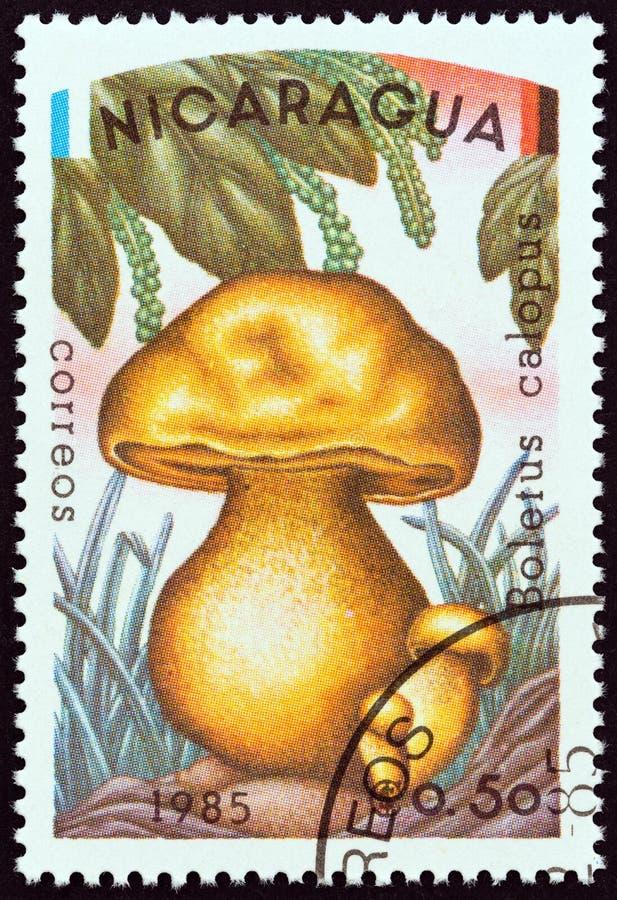 尼加拉瓜-大约1985年:在尼加拉瓜打印的邮票显示牛肝菌蕈类calopus,大约1985年 免版税图库摄影