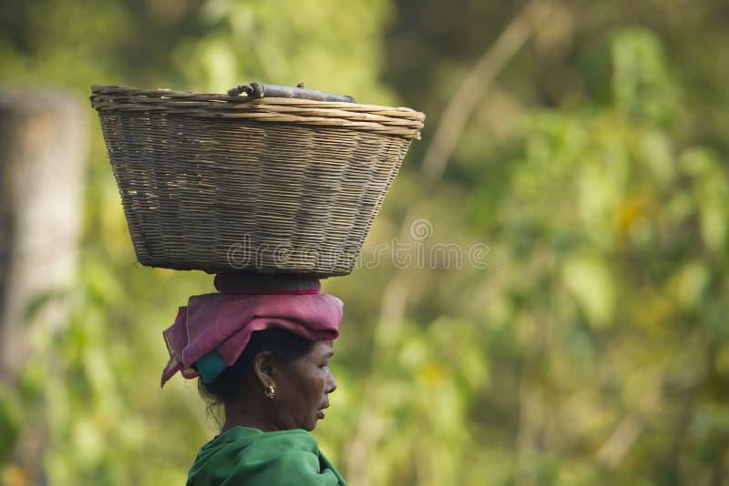 尼泊尔在她的头的taru妇女运载的篮子 免版税库存照片