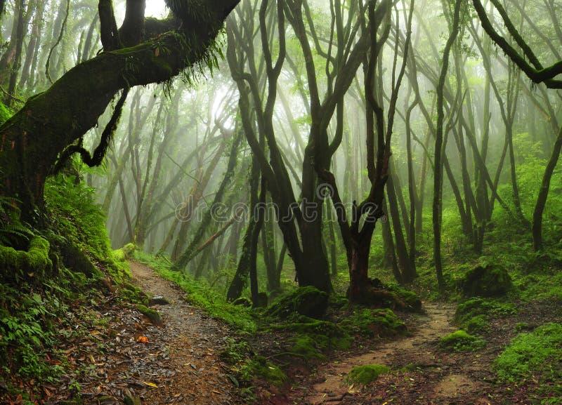 尼泊尔密林 库存照片