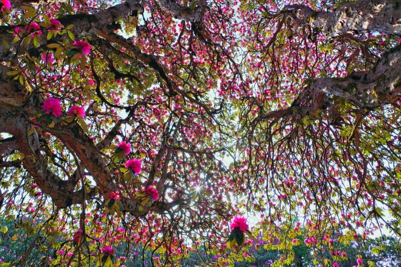尼泊尔的美丽的花 免版税库存图片