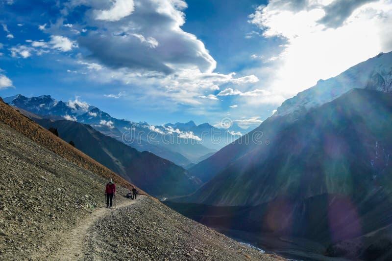 尼泊尔-安纳布尔纳峰电路足迹的老牛 免版税库存照片