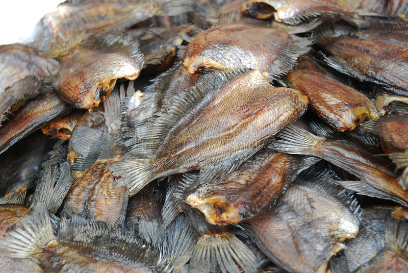尼罗罗非鱼鱼在市场上 库存照片