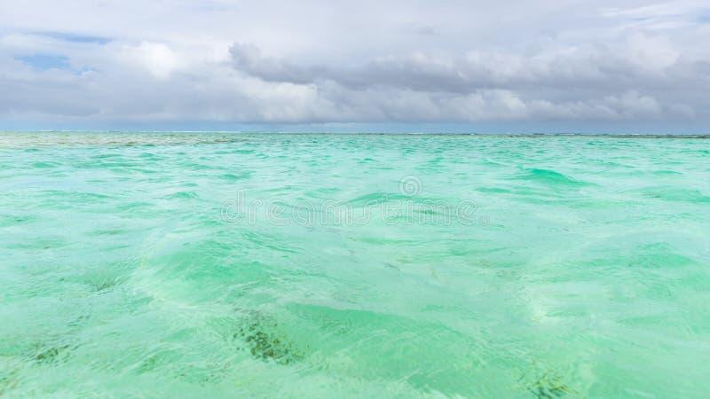 尼龙水池清楚的海水覆盖物珊瑚和白色沙子全景的多巴哥旅游胜地浅深度 库存图片