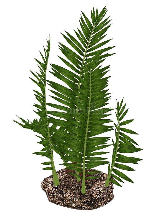 尼巴椰子burtinii史前植物- 3D回报 向量例证
