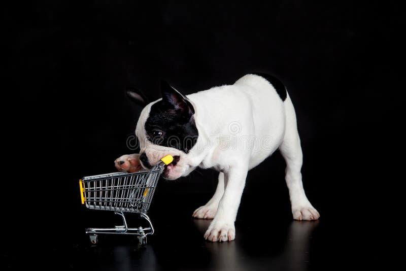 尾随与购物台车的法国牛头犬在黑背景 免版税图库摄影