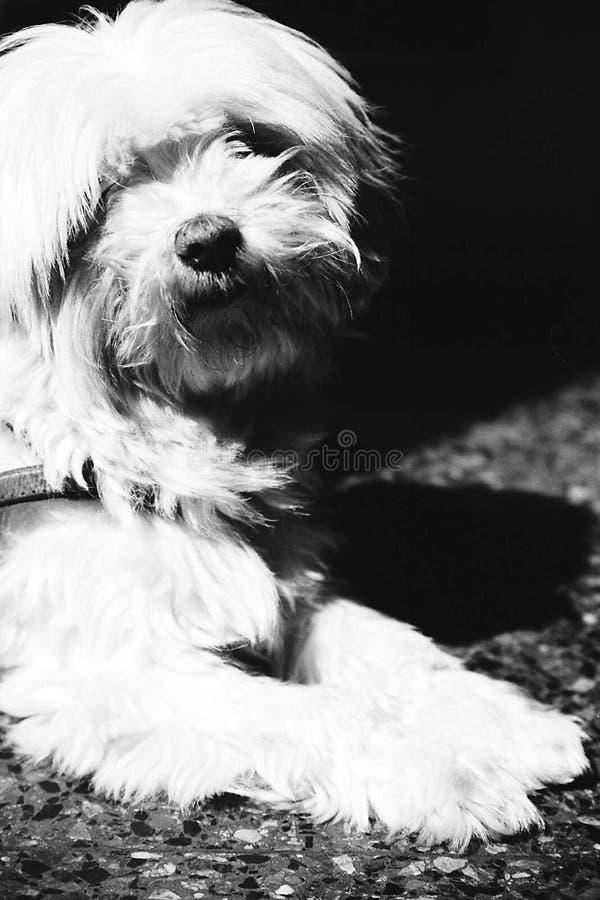 Download 尾随我 库存照片. 图片 包括有 宠物, 敌意, 其它, 小狗, 少许, 投反对票, 动物区系, 朋友, 空白 - 191784