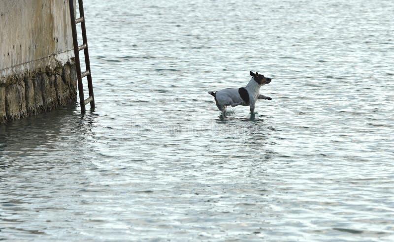 尾随跳跃到水,狗狗,滑稽的狗,飞行的狗,狗狗 库存照片