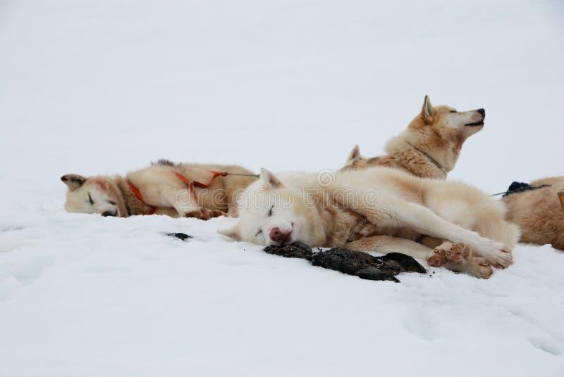 尾随雪撬 库存图片