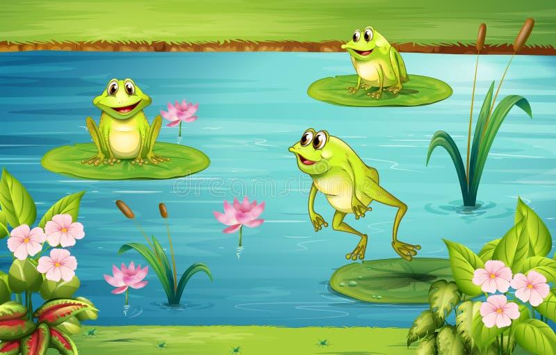 居住在池塘的三只青蛙 皇族释放例证