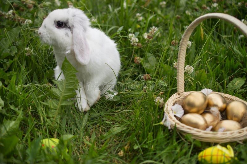 居住的复活节兔子用在一个篮子的鸡蛋在一个草甸在春天 库存图片