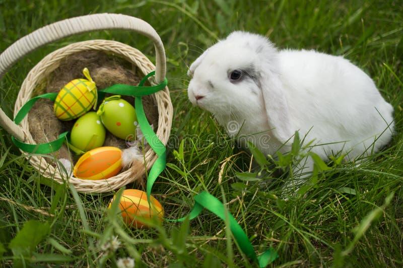 居住的复活节兔子用在一个篮子的鸡蛋在一个草甸在春天 免版税库存图片