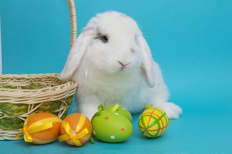 居住的复活节兔子用鸡蛋和在蓝色背景的一个篮子 库存图片