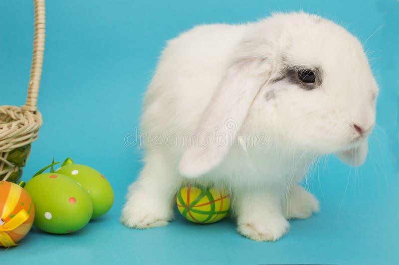 居住的复活节兔子用鸡蛋和在蓝色背景的一个篮子 图库摄影