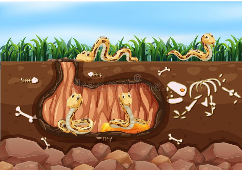居住蛇的家庭地下 库存例证