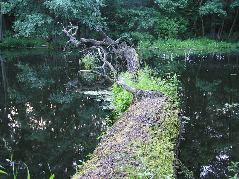 居住死的树2 免版税库存照片