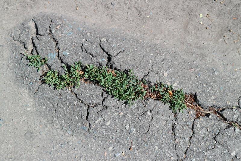 居住绿草破坏灰色柏油路 免版税库存照片