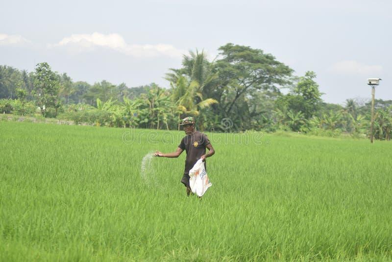居民给从BULOG的肥料用途津贴 库存图片