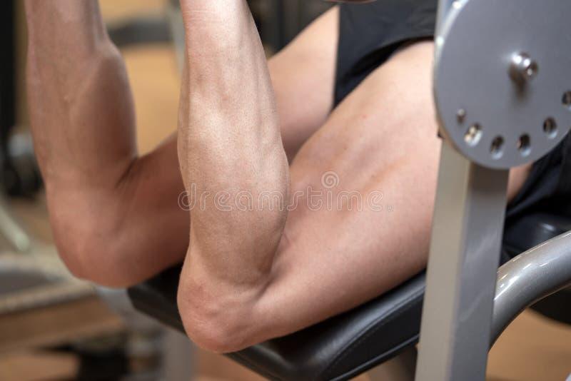 屈曲在腿卷毛健身房机器的人isquiotiobial腿肌肉 体育、健身、体型和人概念 免版税库存图片