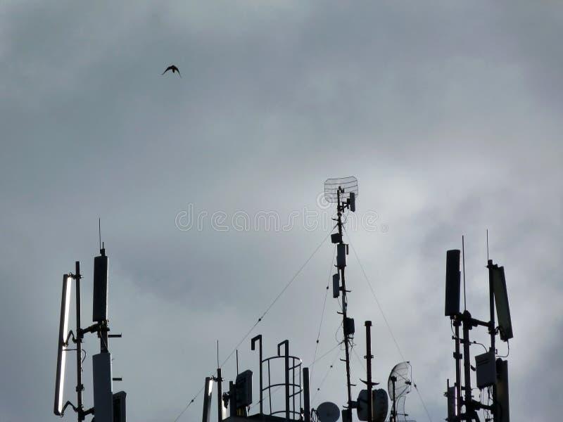 屋顶顶面无线电广播发射机和鸽子在天空蔚蓝下 图库摄影