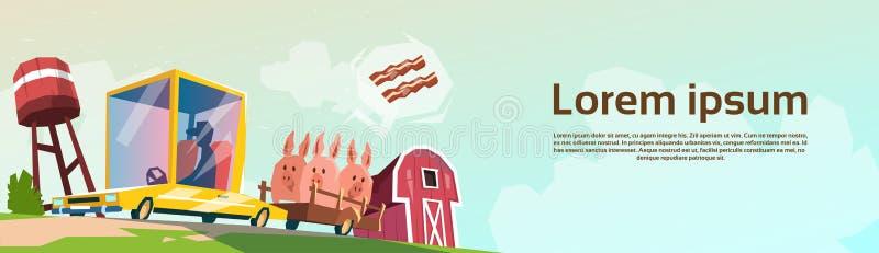 屠户农夫运载在汽车的猪待售 向量例证