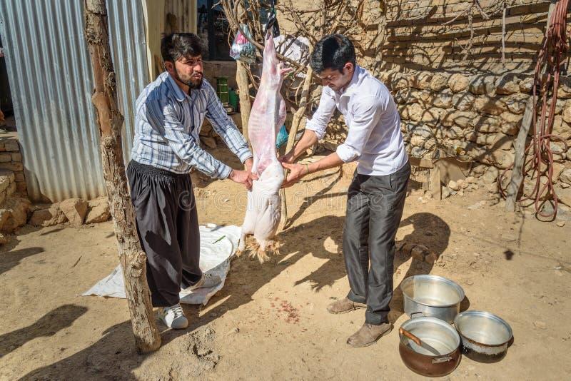 屠杀和剥皮绵羊的伊朗人在婚礼的围场在村庄 洛雷斯坦省 伊朗 免版税图库摄影