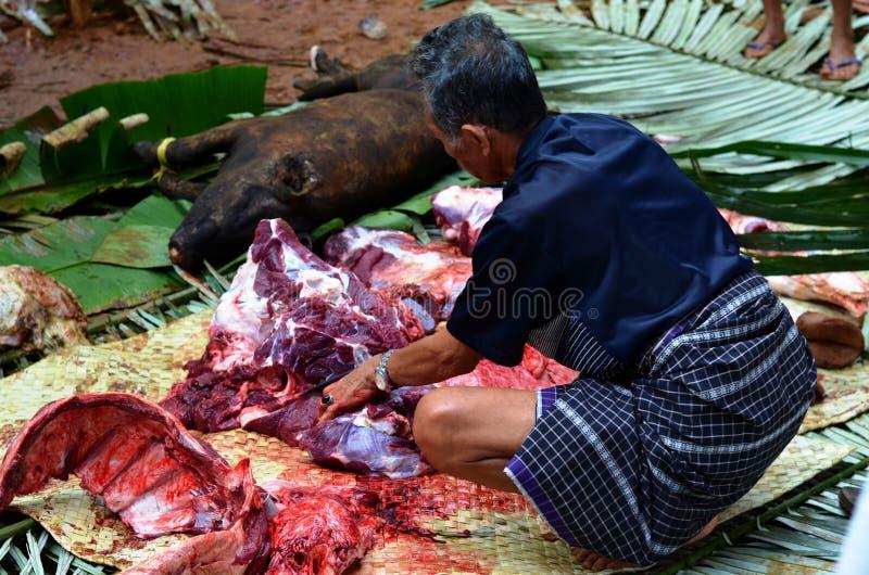 屠杀,塔娜Toraja,苏拉威西岛 免版税库存图片