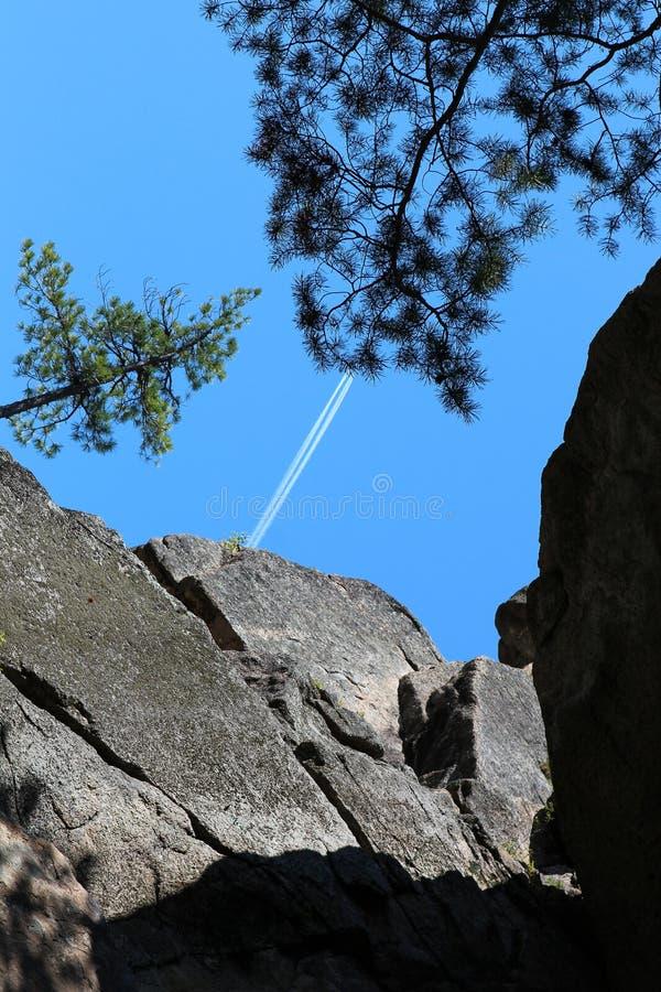 山'骑士' 西伯利亚森林taiga 台面呢 桦树林木根 库存图片