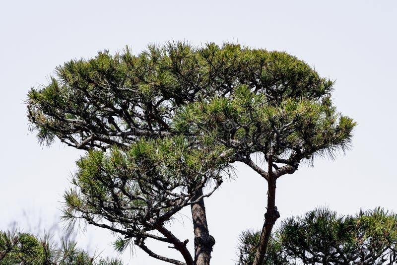 山、树、草、河的景观 免版税库存照片