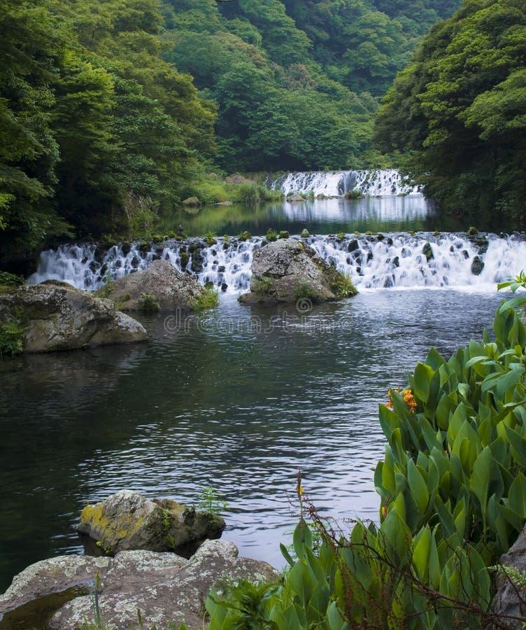 山与橙色花的森林瀑布在岩石 免版税库存图片