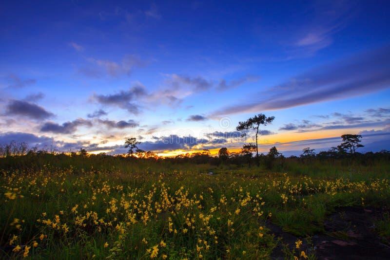 山与花的风景日落在Phu Hin荣Kla 库存图片