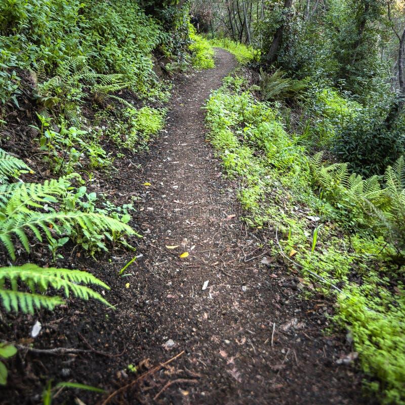 山供徒步旅行的小道在大瑟尔加利福尼亚 免版税库存照片