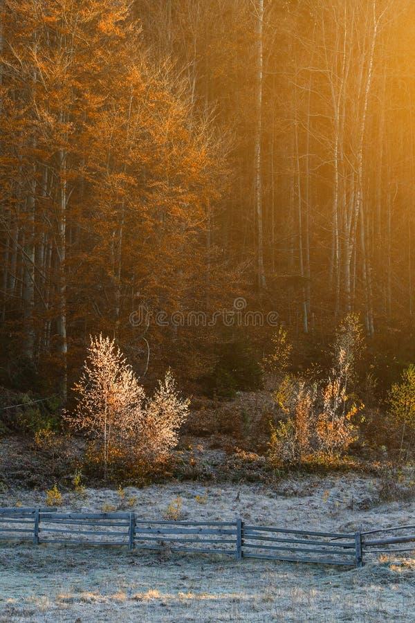 山农场的农村房子在岩石下的森林里 早晨霜在不可思议的金黄秋天 在背后照明温暖的光束 库存照片