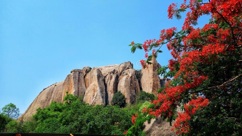 山和五颜六色的树报道的这样美好的自然 免版税库存照片