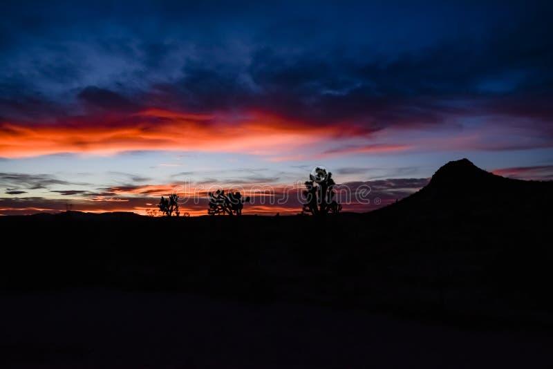 山和仙人掌日落在沙漠 图库摄影