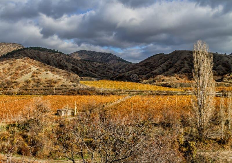山和天空背景的葡萄园  库存图片