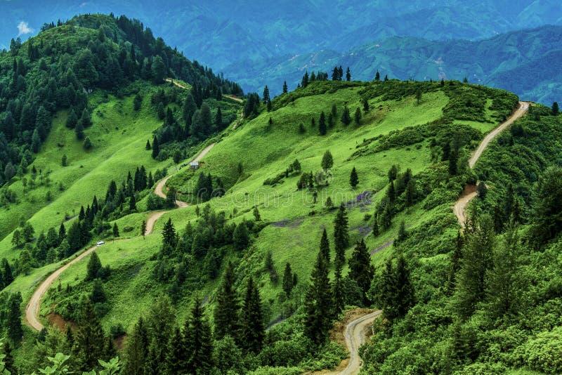 山和森林以各种各样的绿色 库存照片