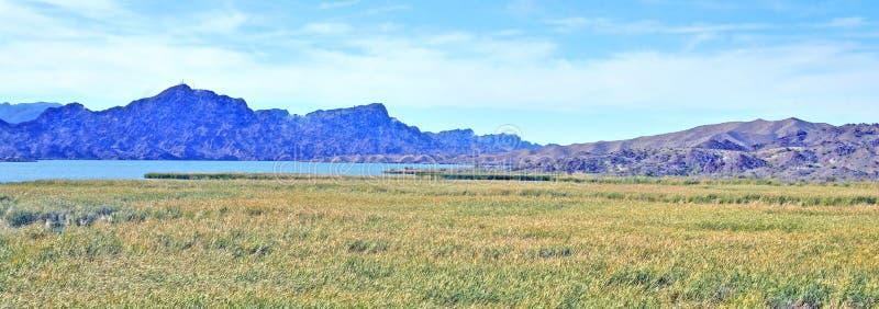 山和沼泽在科罗拉多河旁边 免版税库存照片