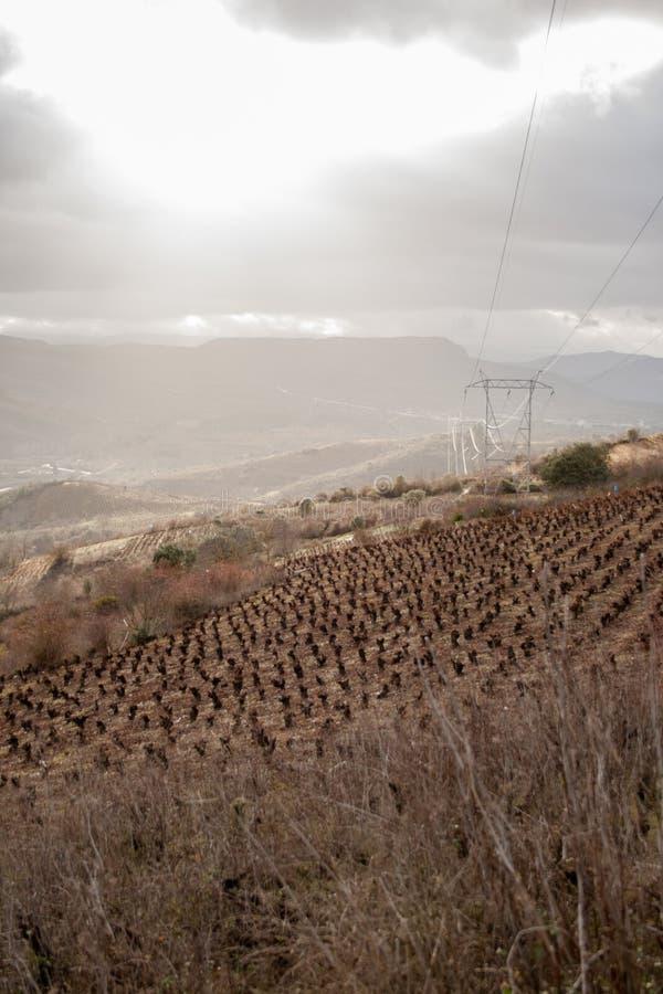 山和高压塔包围的葡萄园 免版税库存照片
