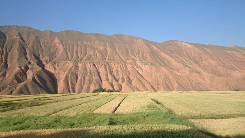 山和高地大麦 免版税库存图片